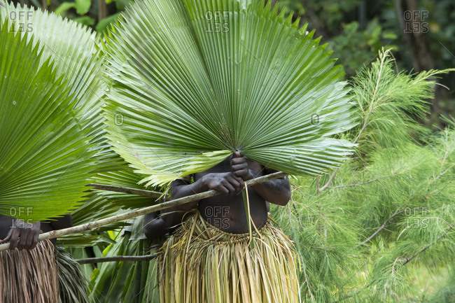 Ceremonial dancers in grass skirt costume with large palms in front of their faces, Loh Island, Torres Islands, Republic of Vanuatu, Australia
