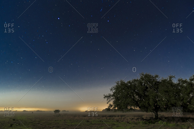 Long exposure night photography showing fog bank illuminated by moonlight with oak trees in foreground and city lights in the background. Fort Ogden, Florida, USA