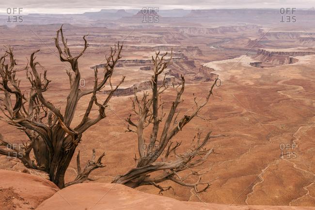White Rim landscape, Canyonlands National Park, Utah, USA
