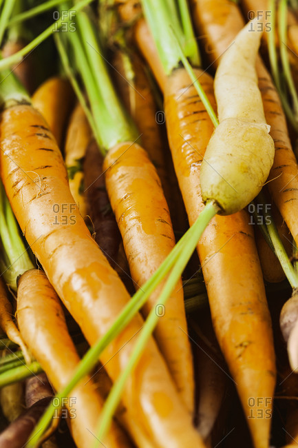 Close up of fresh raw carrots with stems