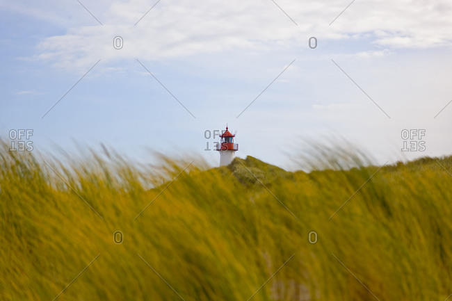 Dune and dune grass and lighthouse in the background, Sylt