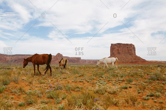 Horses grazing in Monument Valley