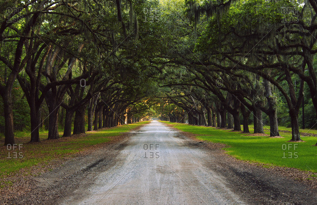 Oak avenue at Wormsloe Historic Site in Savannah, Georgia