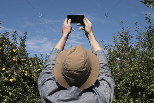 Man in an orchard takes photo with his phone