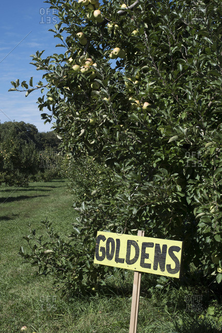 Sign at an apple orchard