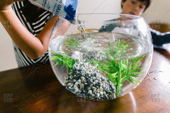 Siblings getting a new fishbowl ready