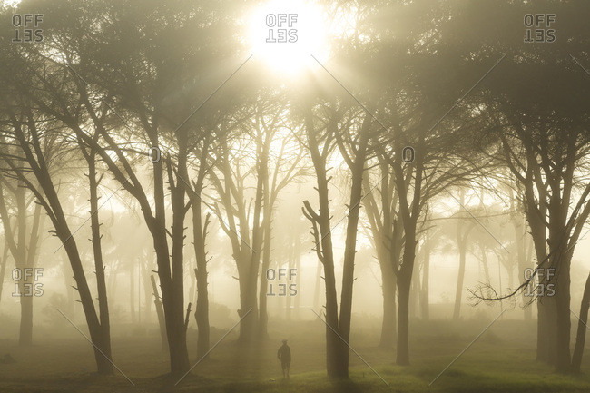 Person in foggy forest at sunrise