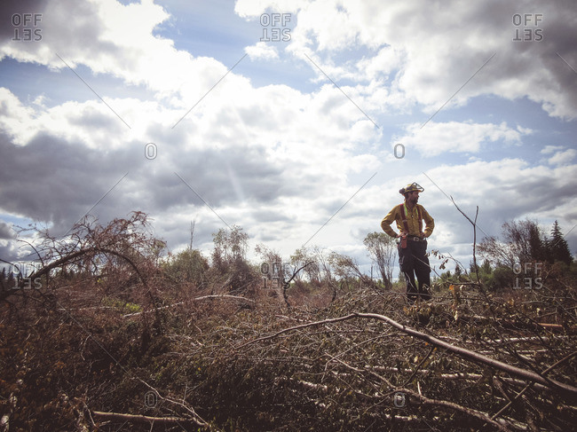 Alberta, British Colombia, Canada - July 20, 2015: Member of Panorama Crew Services asking standing in the fallen trees and brush, Alberta, British Colombia, Canada