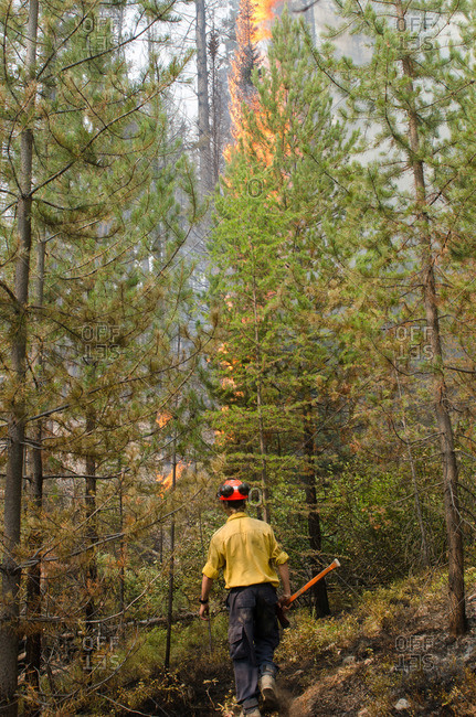 Alberta, British Colombia, Canada - July 27, 2015: Member of Panorama Crew Services walking towards burning trees, British Colombia, Canada