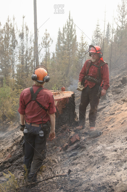 Alberta, British Colombia, Canada - July 27, 2015: Two members of Panorama Crew Services standing by stump of freshly cut tree, British Colombia, Canada