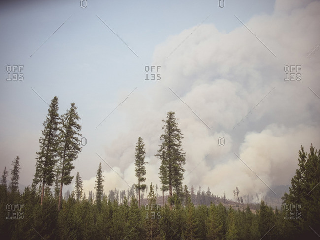 Smoke billowing above trees coming from forest fire, British Colombia, Canada