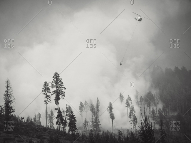 Black and white of smoke billowing above trees coming from forest fire, British Colombia, Canada