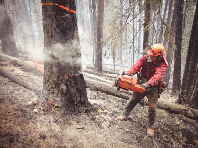 Alberta, British Colombia, Canada - July 28, 2015: Close up of member of Panorama Crew Services cutting down burnt tree, British Colombia, Canada