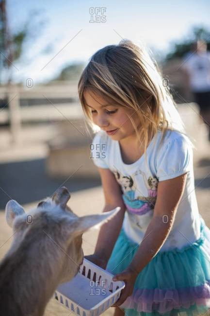 Young girl feeding goat at petting zoo