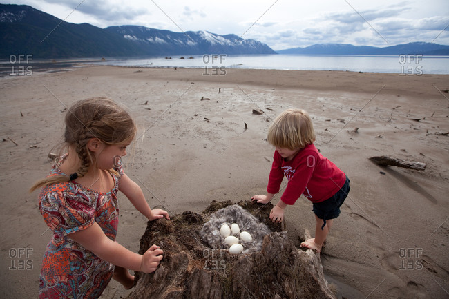 A young boy and girl with a found nest full of eggs in a stump on a beach