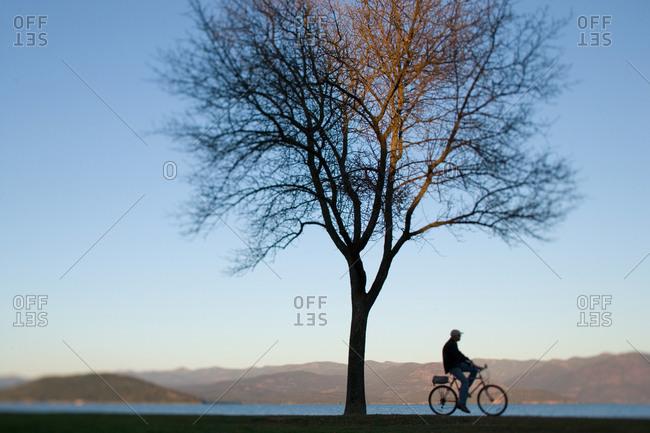 Cyclist riding next to lone tree along lake shore