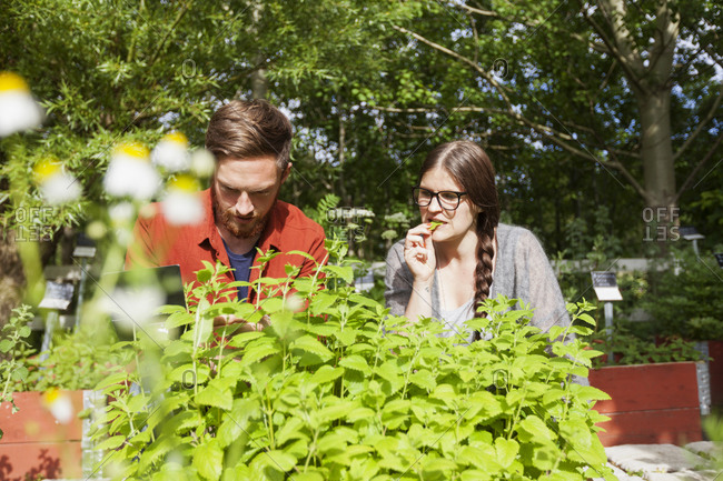 Couple tasting freshly grown herbs