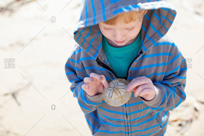 Boy examine a sand dollar on beach
