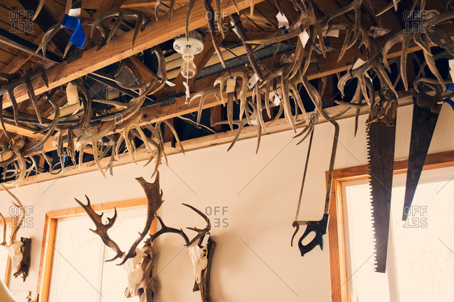 Antlers and skulls hanging in a hunting lodge
