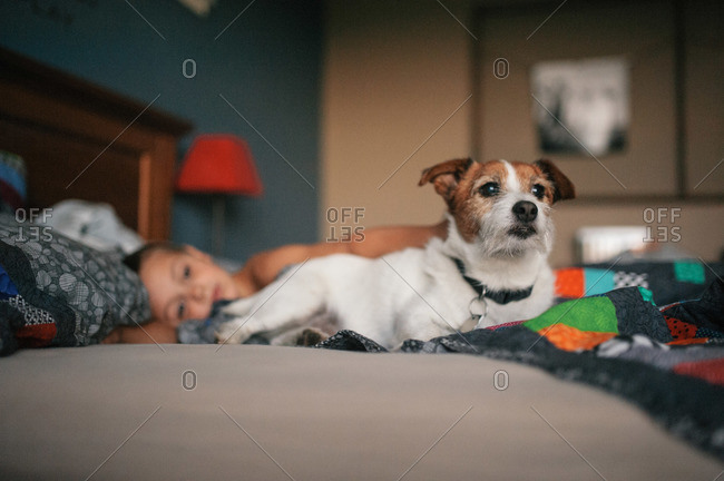 Alert dog lying on bed near boy