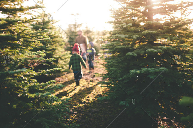 Family looking for a Christmas tree on farm