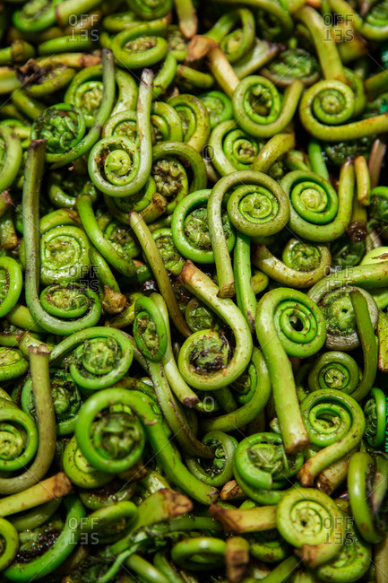 Stack of roasted fiddleheads