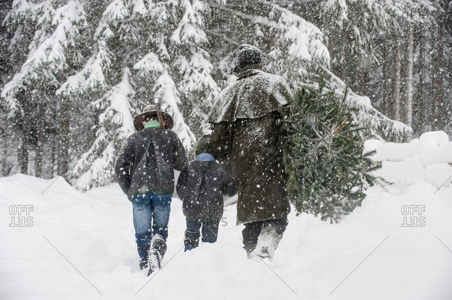 Father with two sons carrying Christmas tree in winter landscape, Altenmarkt-Zauchensee