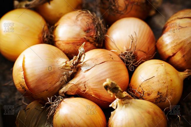 Organic onions, close up