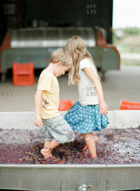 Siblings holding dancing on grapes to make wine or juice