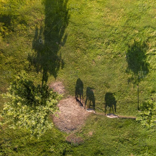 Donkeys in Grutas Park in Lithuania