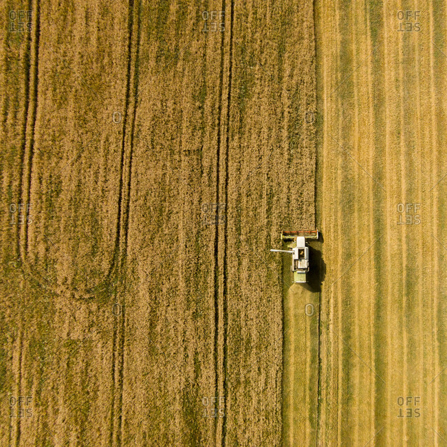Harvesting a farm field in Raseiniai, Lithuania