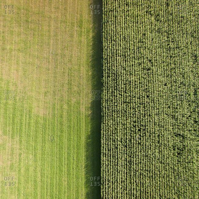 Fields in Vidukle, Lithuania