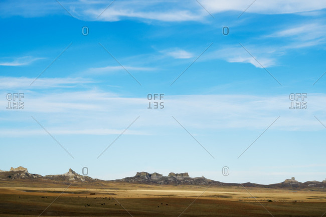 Landscape with grazing cattle and hay fields