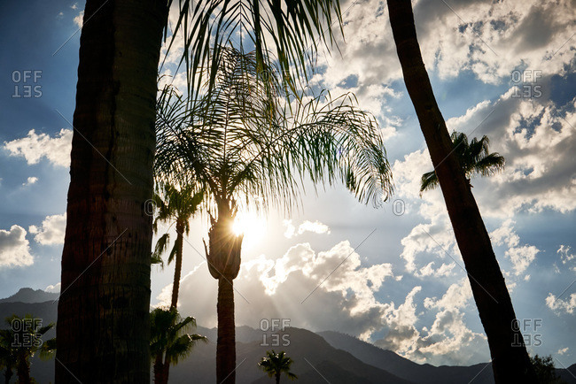 Silhouetted palm trees with mountains in distance