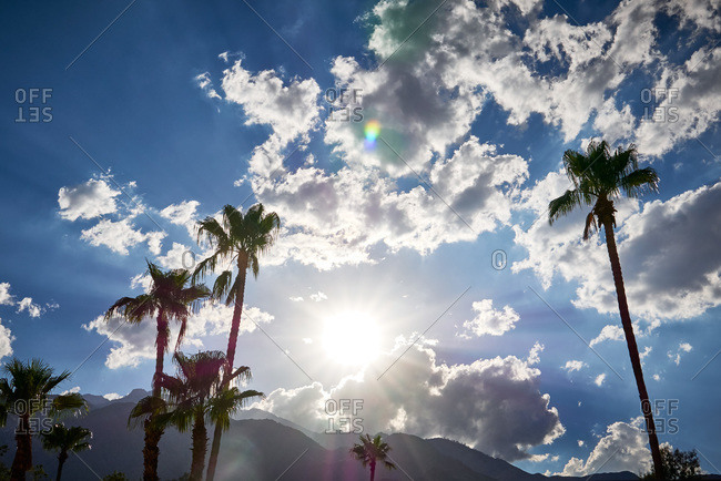 Sun shining over palm trees and mountains