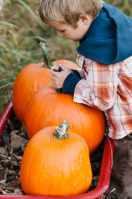 Boy placing pumpkin in wagon