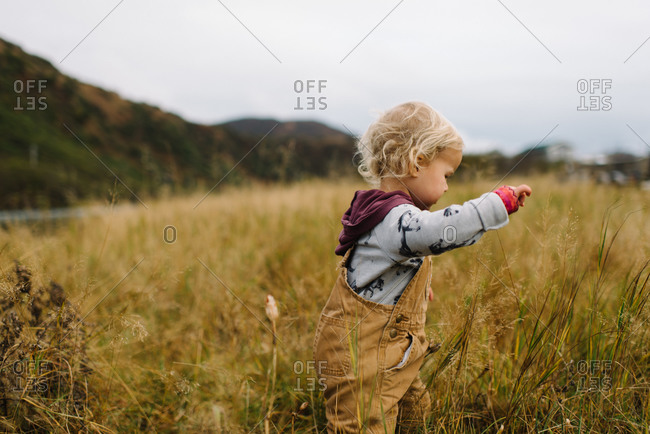 Toddler boy exploring tall grass in autumn