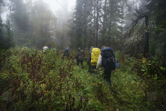 Group of backpackers in rain gear walking through tall grass in woods
