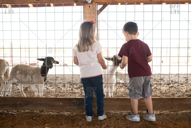 Children with goats at petting zoo
