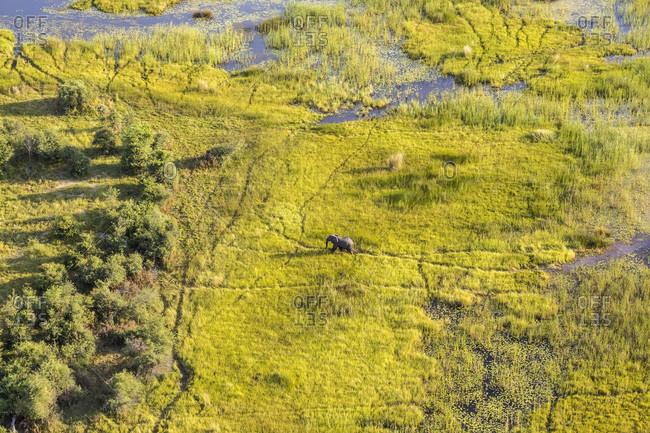 Elephant in Okavango Delta in Botswana, Africa