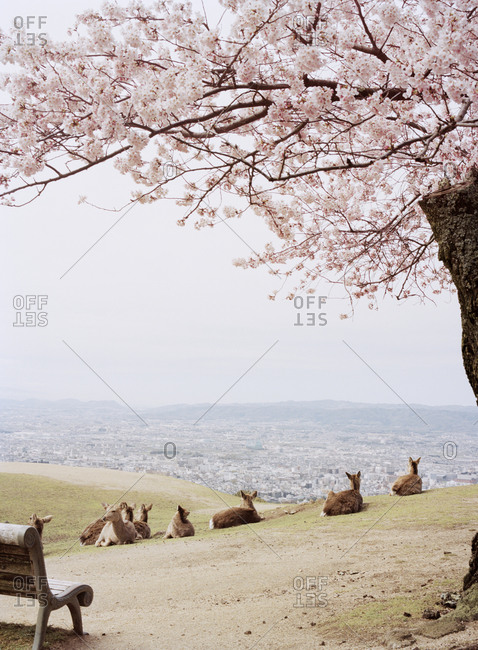 A group of deer overlooking the city