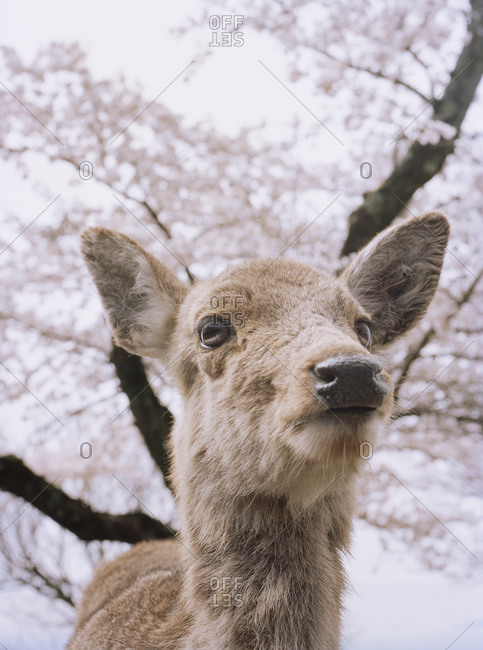 A portrait of a deer