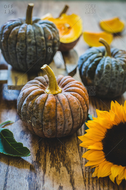 Black futsu squash and sunflowers