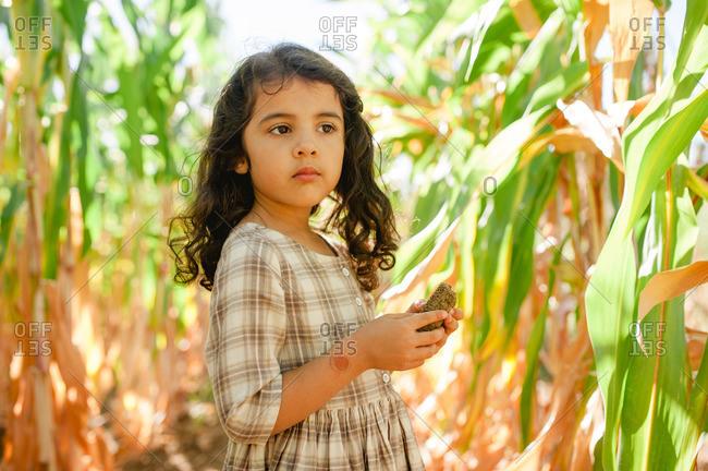 Little girl standing in a corn field