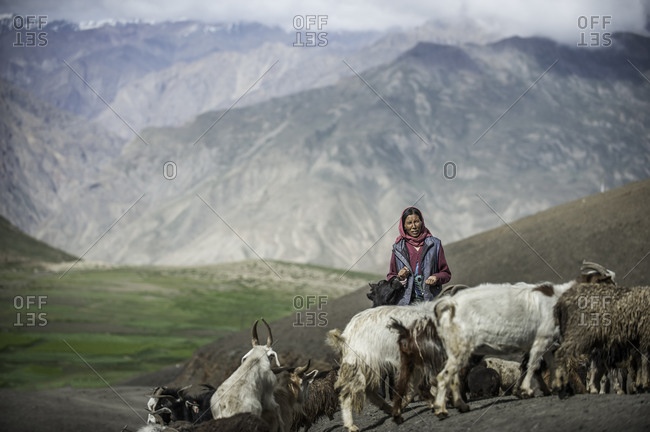 Woman with goat herd in the Indian Himalayas