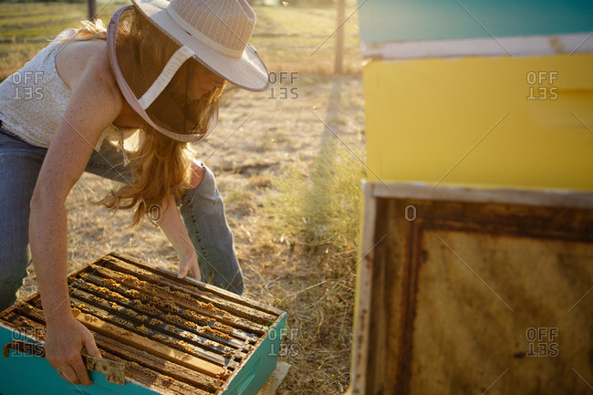 Female beekeeper placing bee hive box on the ground