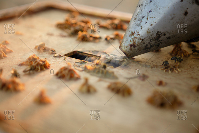 Close up of smoker going into hole on bee hive box