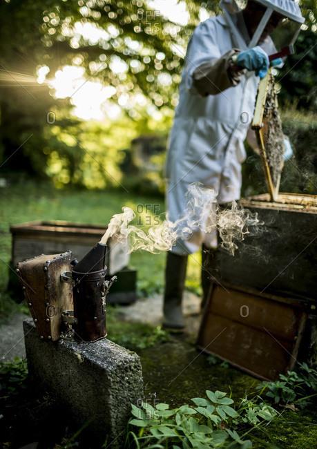 Beekeeper looking at frames inside a beehive