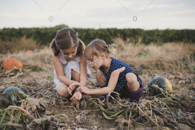 Girls examining a cricket in a pumpkin patch