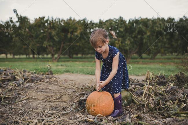 Girl picking a pumpkin at a pumpkin patch